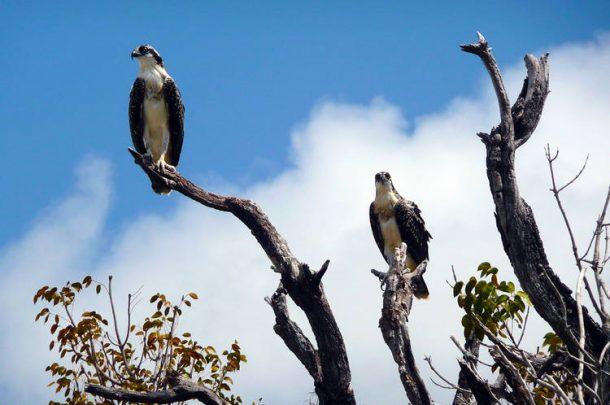 AVA-Everglades