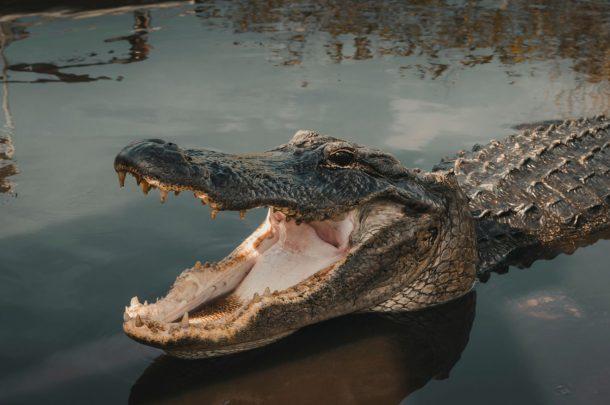 AVA-Everglades-USA